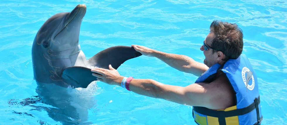 Dolphin Disco progr 1 Slide 2