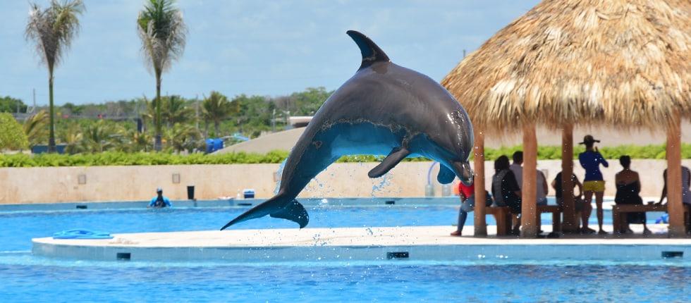 Slide 1 Dolphin Disco prog 2