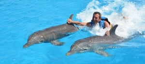 Slide 3 Dolphin Disco prog 3